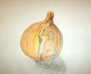 Zwiebel-Studie. Doris Werheid